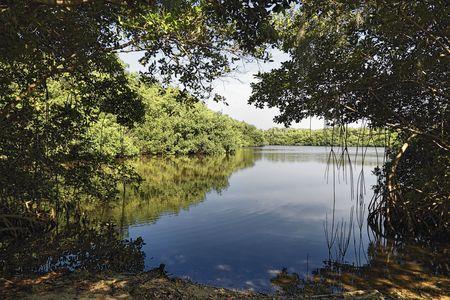 Close-up van een van de vele meren in de Florida Everglades  Stockfoto