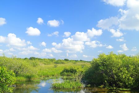 sawgrass: View of the Florida Everglades Marsh Landscape Stock Photo