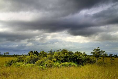 Beautiful scene of the Florida Everglades Landscape during a severe summer storm Stock Photo - 7739400