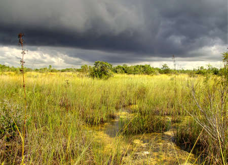 Beautiful scene of the Florida Everglades Landscape during a severe summer storm Stock Photo - 7739401
