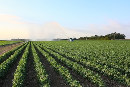 Irrigation of farmland to ensure the quality of the crop of squash photo