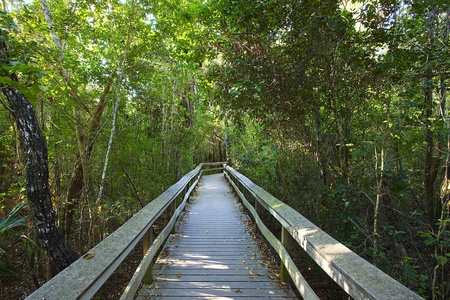 Boardwalk in a Tropical Hammock or tree island in the Florida Everglades photo