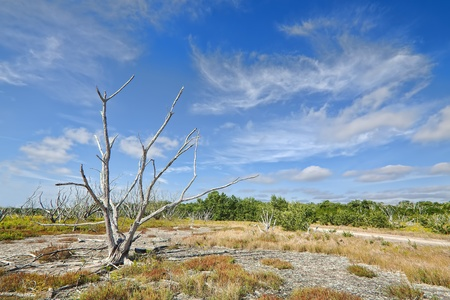 cirrus: Beautiful view of the Everglades coastal prairies with buttonwood, marl, and Saltwort Stock Photo