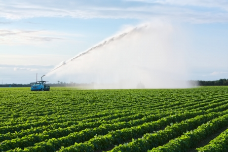 Irrigation of farmland to ensure the quality of the crop Stock Photo - 13810855
