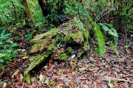 arboles secos: Un viejo árbol caído en el suelo del bosque después de años de servicio en una hamaca en los Everglades de Florida