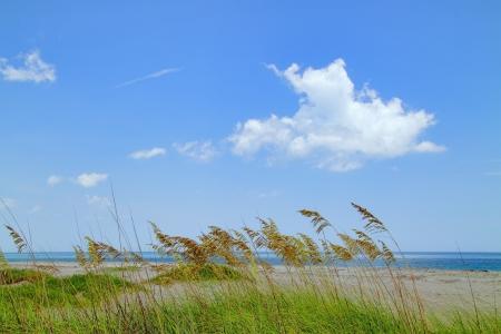 Beautiful scenic beach dunes with Bear grass (Yucca Filamentosa) Stock Photo