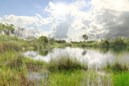 Beautiful landscape in the Florida Everglades National Park