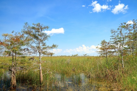 Beautiful landscape in the Florida Everglades National Park photo