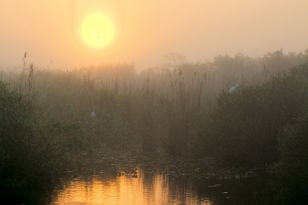 Beautiful sunrise in the Florida Everglades national park photo