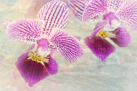Close up of a purple orchid in the phalaenopsis family on a colorful and textured background Фото со стока