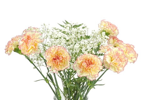 Beautiful bouquet of carnations, the flower of love, with  Gypsophila or Baby Breath flowers, isolated on white photo
