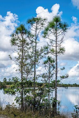 Beautiful lake view landscape