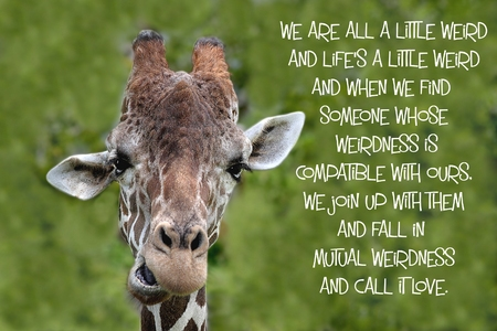Inspirational quote about love, and life with a Portrait of a Giraffe Фото со стока - 32523036