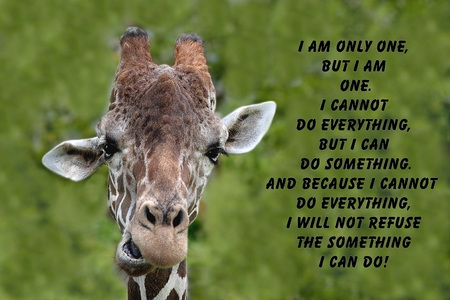 Inspirational quote about love, and life with a Portrait of a Giraffe