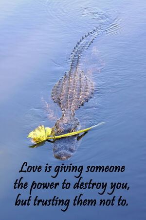 Inspirational quote about love, and life with a Lover boy American Alligator in the background Фото со стока - 32523041