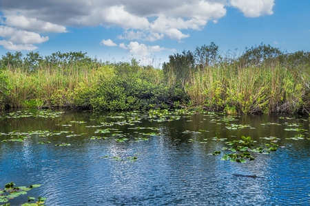 wet season: One of the many lakes in the Florida Everglades with beautiful cloud formations in the Florida Everglades Landscape during the wet season summer months