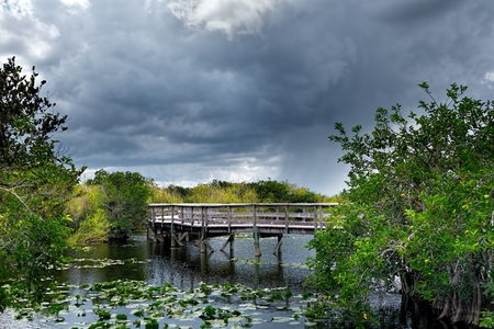 Boardwalk on the Anhinga Trail in the Everglades National Park early in the morning before the visitors arrive Фото со стока