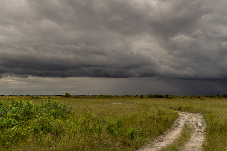 sawgrass: Beautiful scene of the Florida Everglades Landscape during a severe summer storm