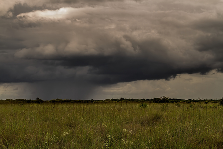 Beautiful scene of the Florida Everglades Landscape during a severe summer storm