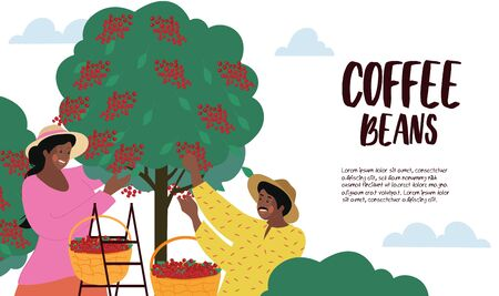 Harvesting and cultivating Coffee Beans poster