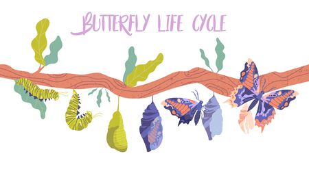 Life cycle and metamorphosis of a butterfly from caterpillar Ilustração