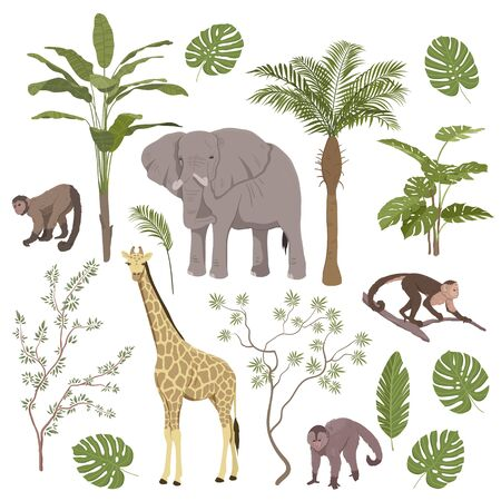 Set of jungle animals and tropical vegetation with giraffe, elephant, monkeys and apes isolated on white, colored vector illustration