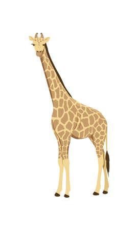 Icon of african giraffe. Wild savannah giraffe. Zoo or wildlife theme. Cartoon vector illustration isolated on white background