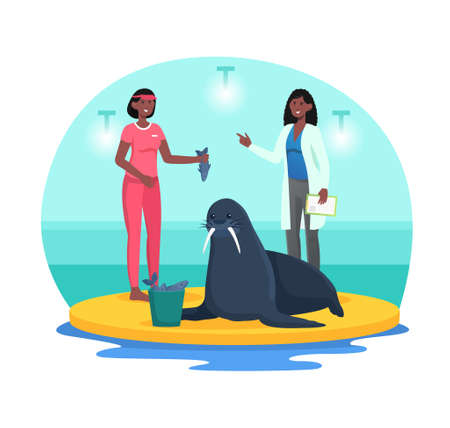 Checking health of navy seal in dolphinarium