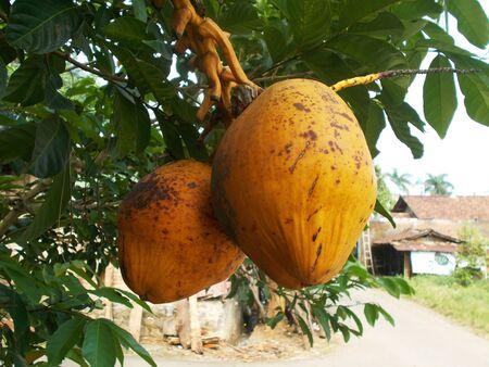 orange coconut Stock Photo