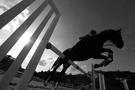 horse jumping: horse jumping a fence Stock Photo