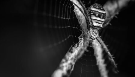 flauna: close up of spider in web