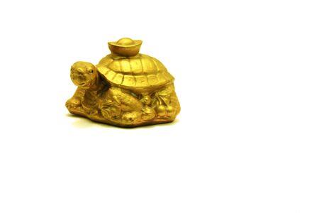 golden turtle photo