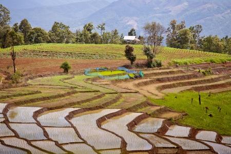 The landscape of Saigon: Ruộng bậc thang ruộng lúa Đông Nam Á ở Thái Lan Kho ảnh