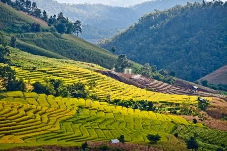 The landscape of Saigon: Ruộng bậc thang trên núi