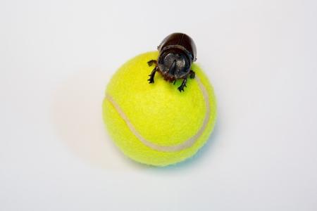 bug on the ball  photo