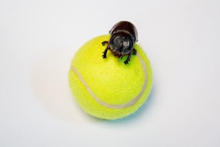 bug on the ball