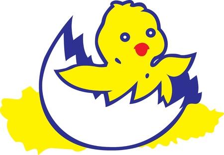 image of chicken on white background