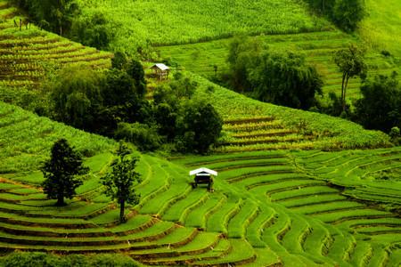 Rice fields on terrace  photo