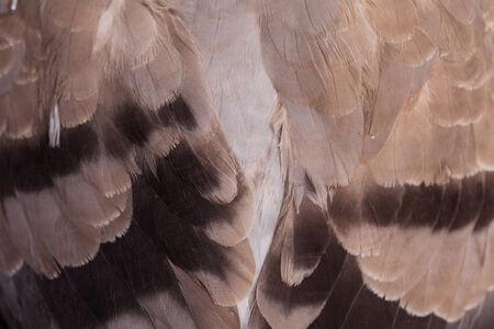 feather pattern  photo