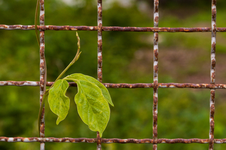 Old Forge iron with green leaves close up  photo