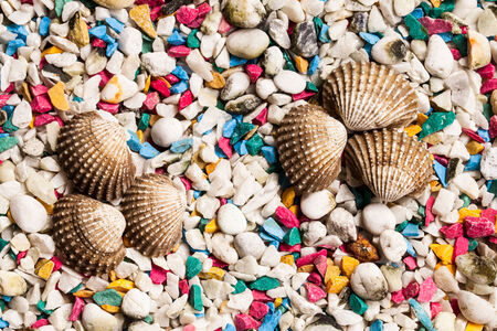 shells and stone background  photo