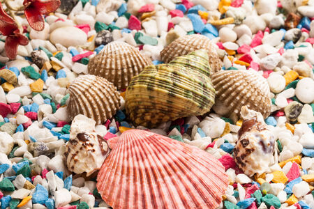 shells and stone background. photo