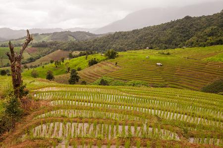 rice fields on terraced- terraced rice fields. photo