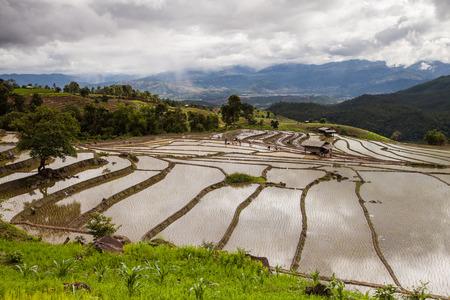 Rice fields on terraced. photo