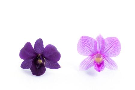 streaked: purple streaked orchid flower, isolated