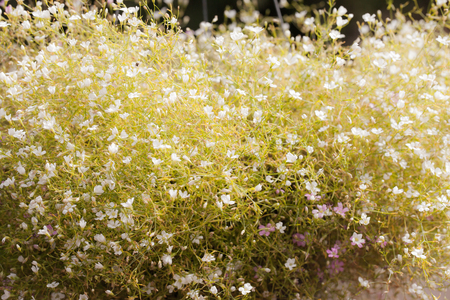 abstract natural background, spring time season. photo