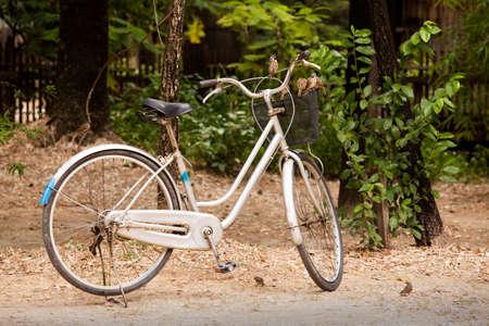 handle bars: Los p�jaros posados ??en el manillar de la bicicleta en el parque.