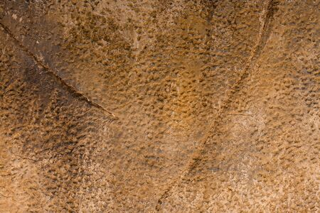 cranny: texture of old concrete wall background.