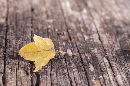 fall leaf: A fall maple leaf sitting on old deck wood. Stock Photo