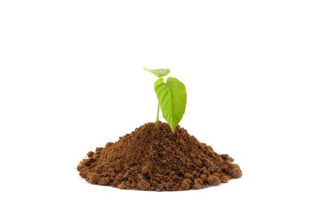 to thrive: Growing young plant isolate on white background.
